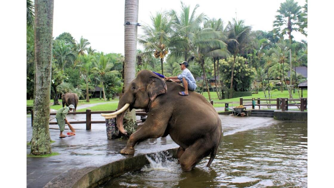 Safari élephant