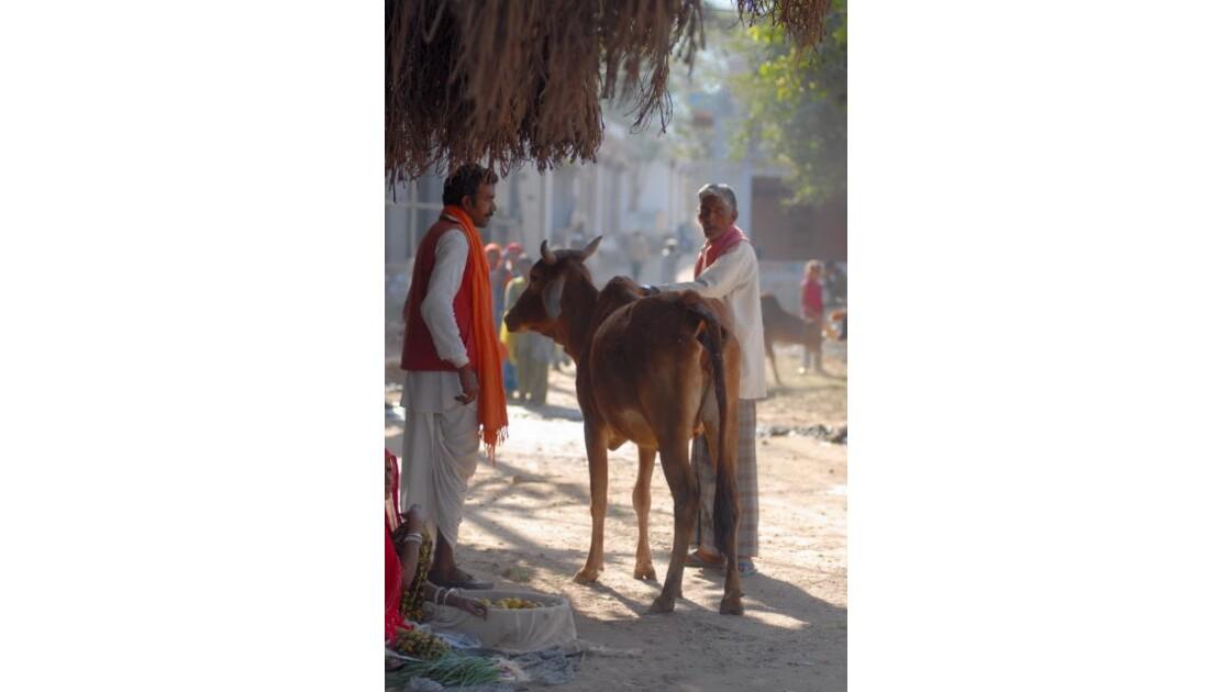 Deux Brahmanes et vache errante