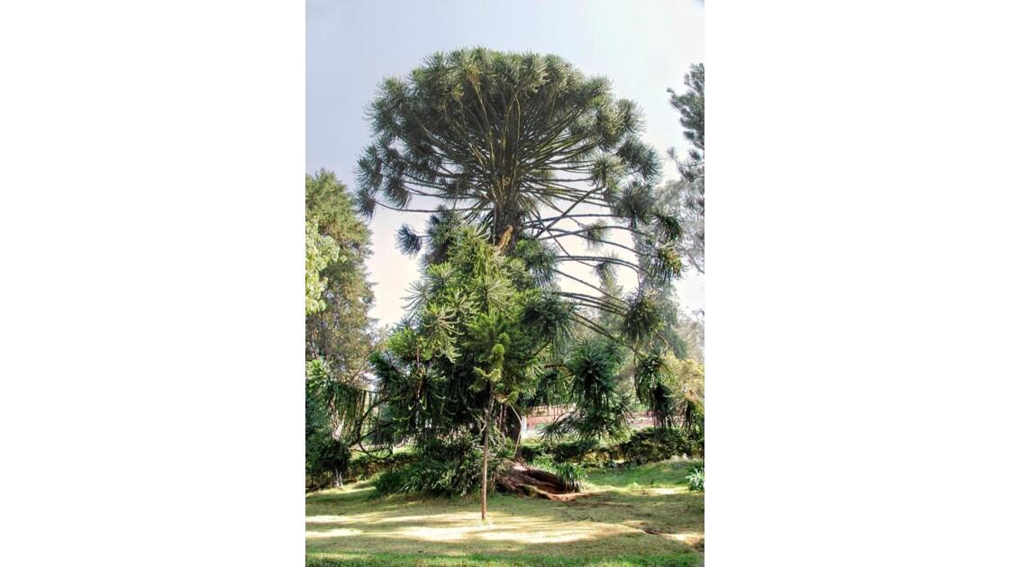hardin botanique Ooty