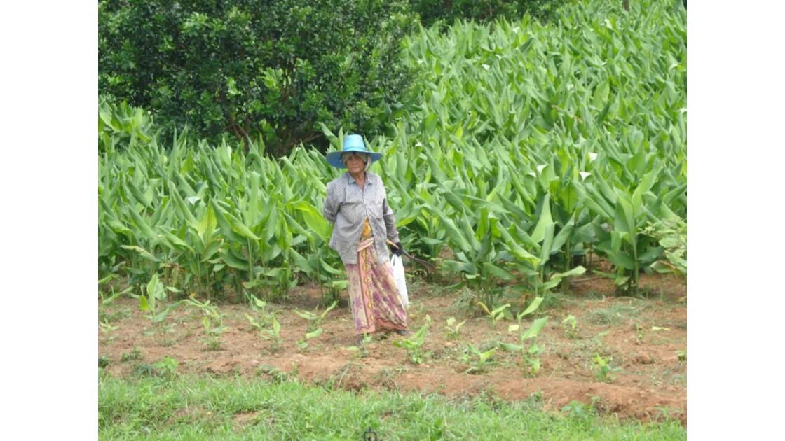 Nord de la Thailande, juin 2008.