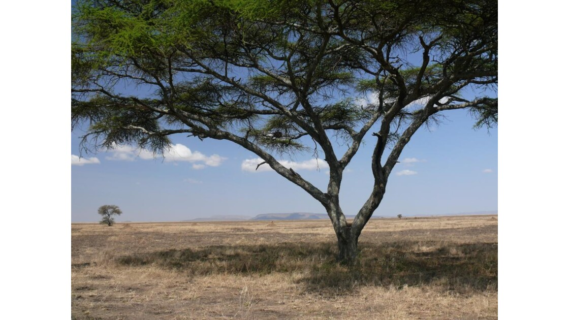 savane du Serengeti