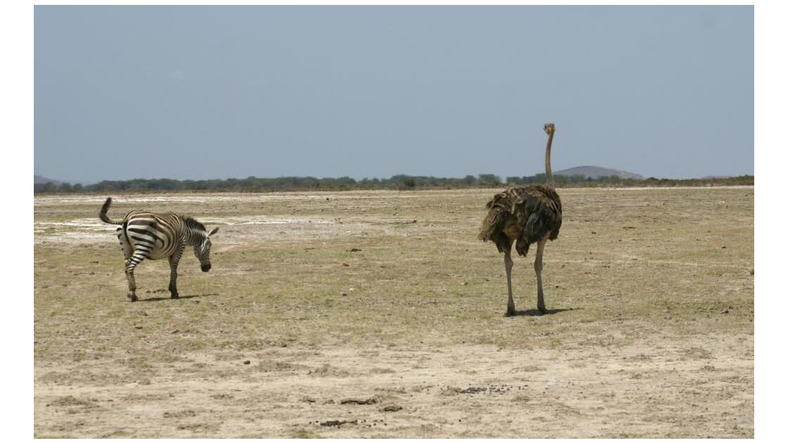 Sécheresse à Amboseli