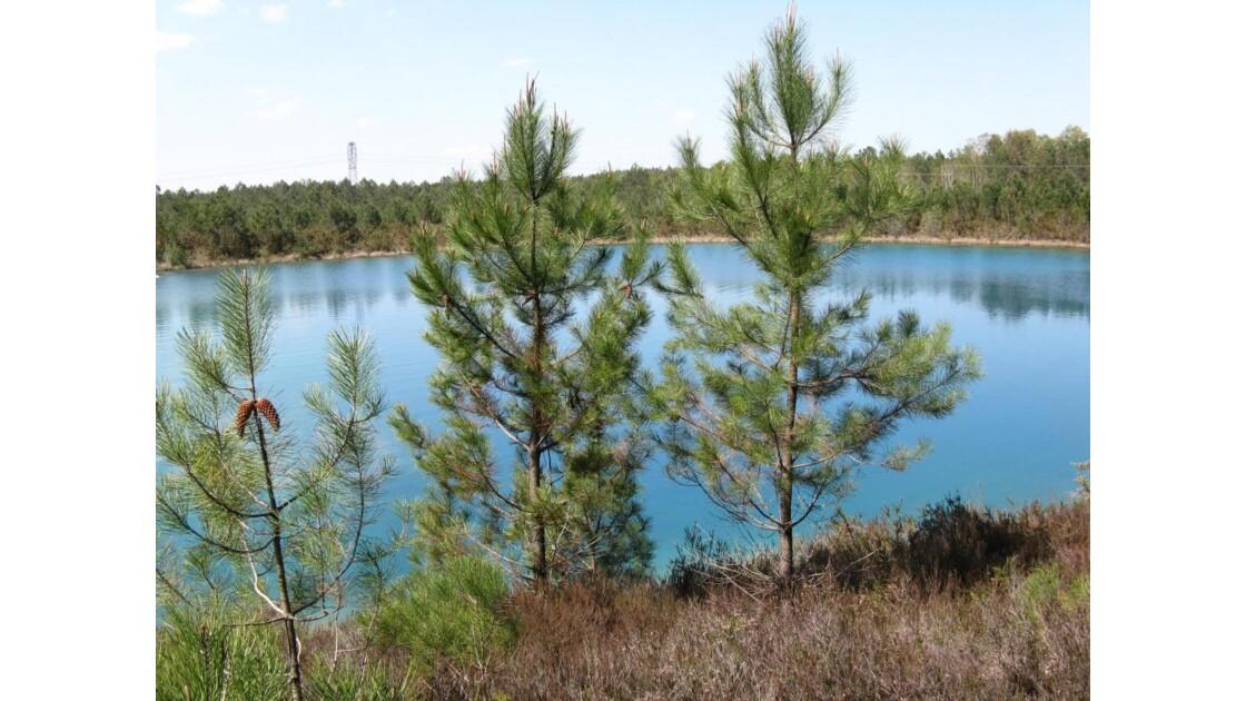 le bleu de l'eau, le vert des pins