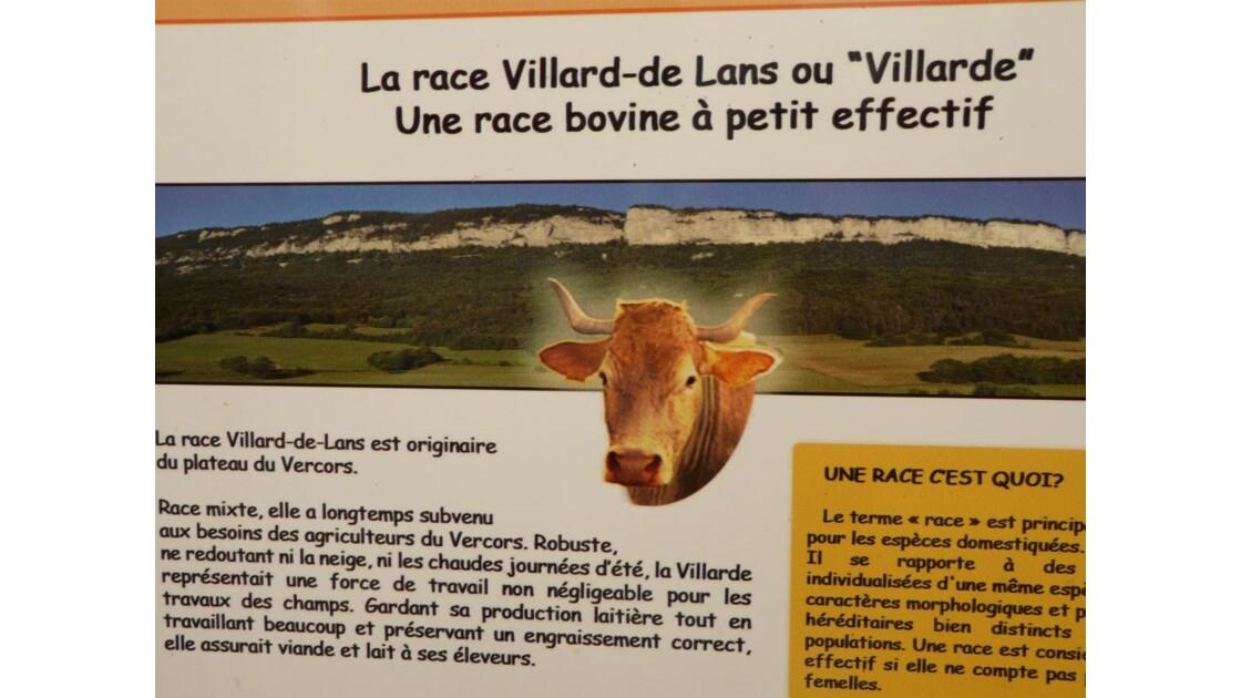 la vache du Vercors
