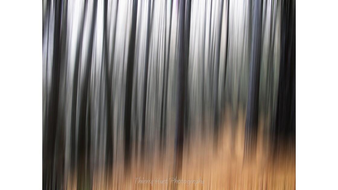 MELESES FOREST