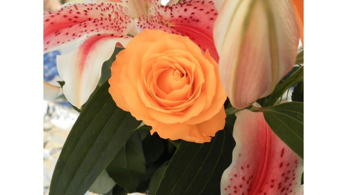 rose orangé