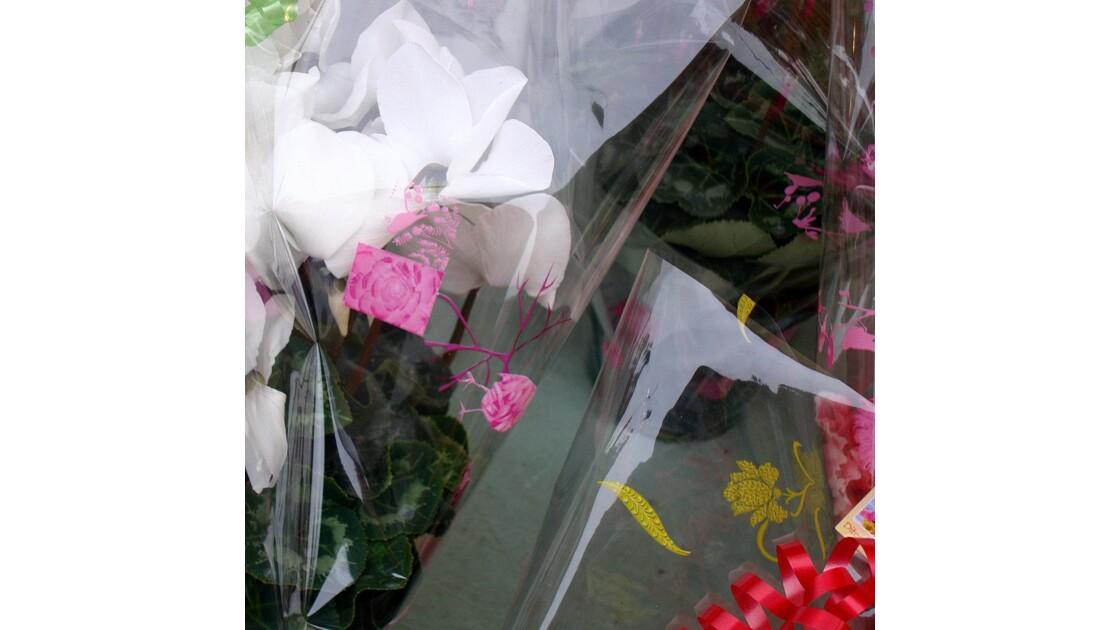 Les fleurs emballées