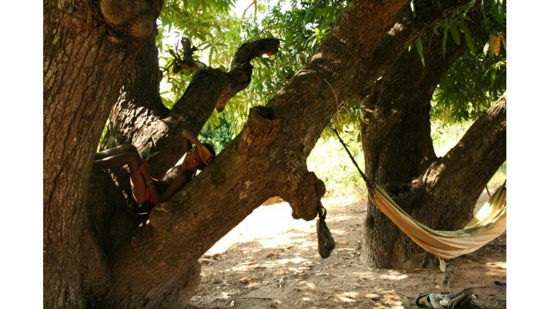 l'arbre et le hamac