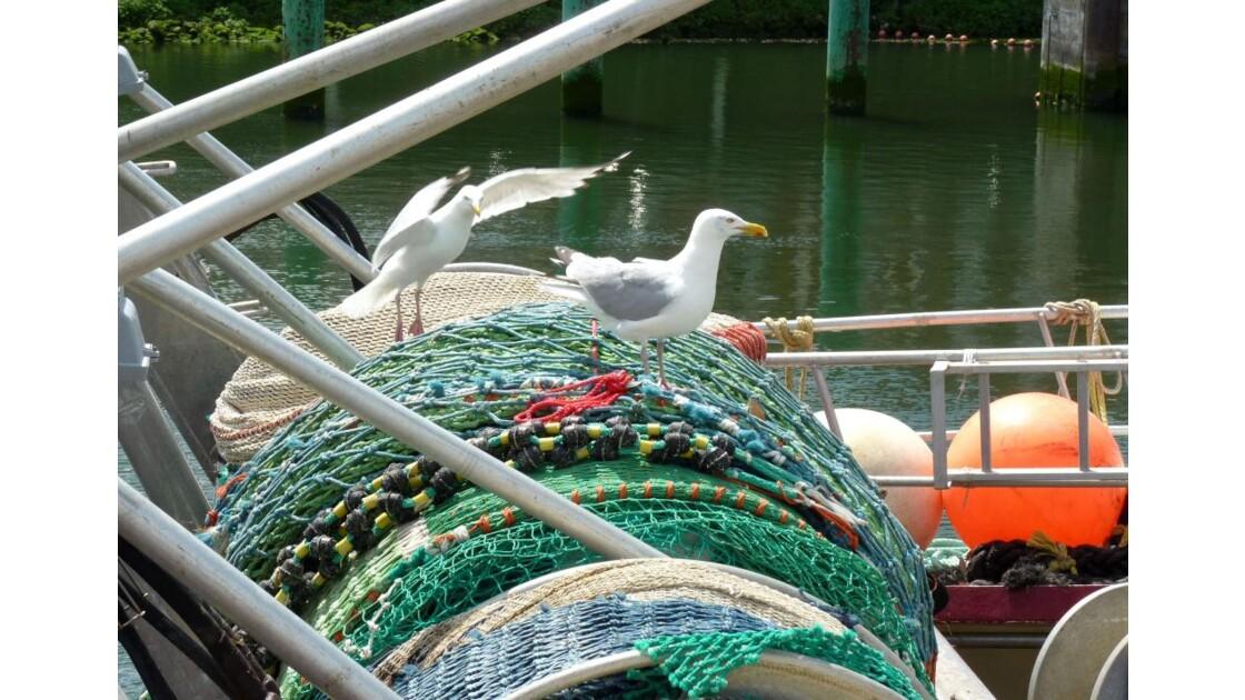 Goélands à bord