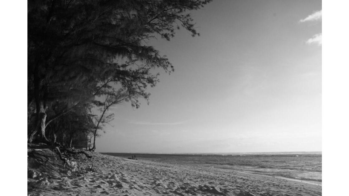 lagon plage et filao