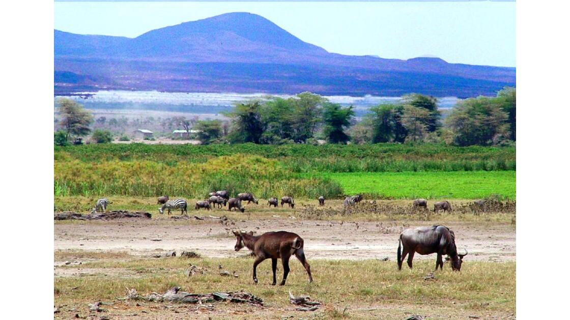 Amboseli  ....