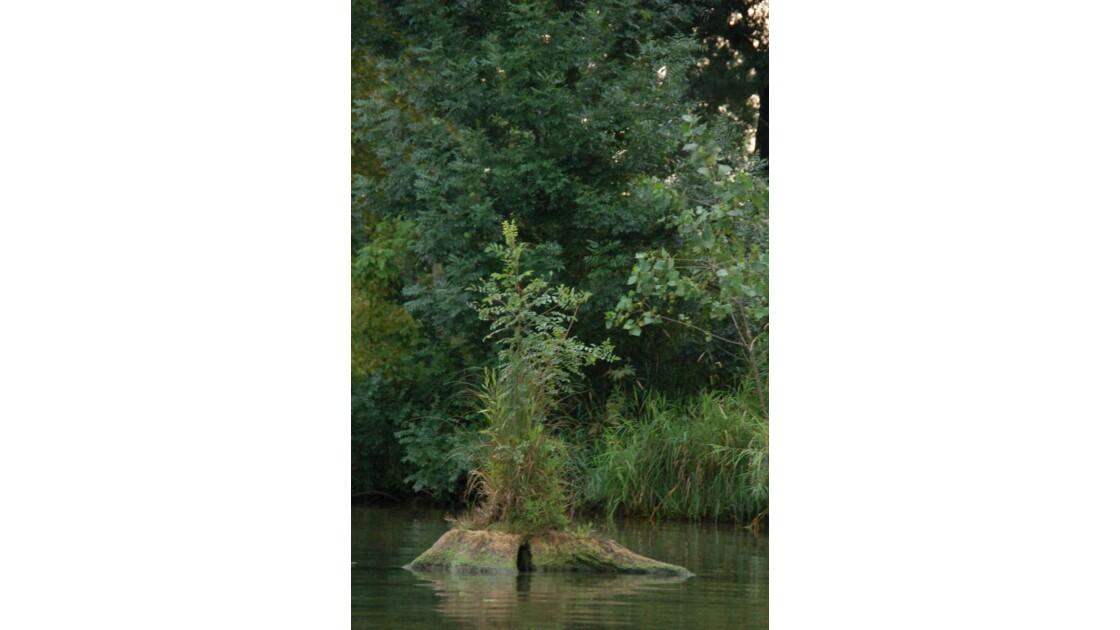 un arbre sur un tronc d'arbre
