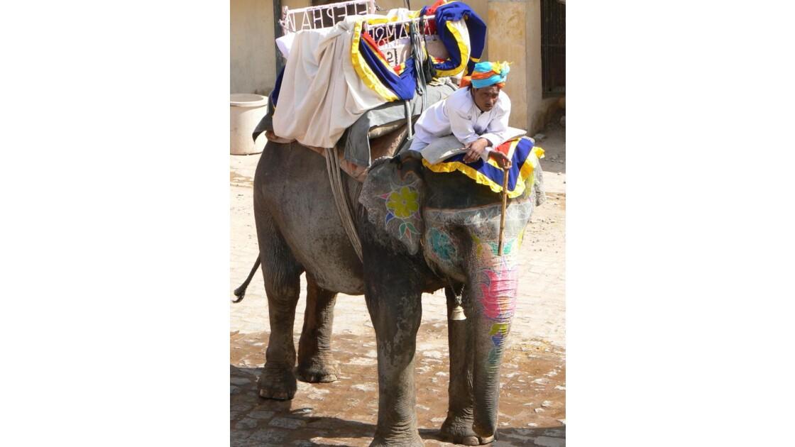 Eléphant et son cornac fatigué