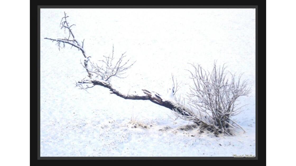L'arbre sans tronc ...
