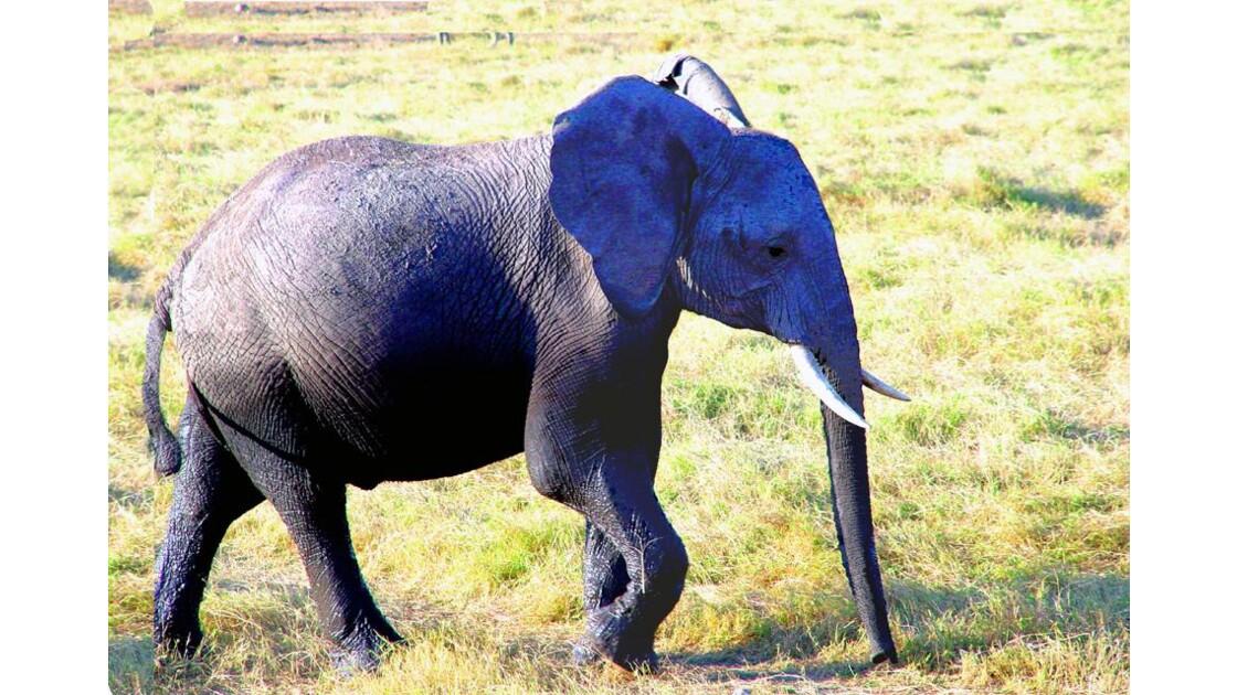 un petit dernier pour Amboseli