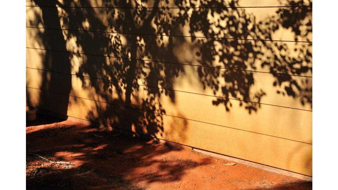 ombres_rais_34.jpg