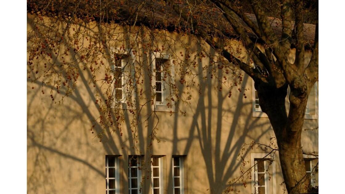 ombres_rais_35.jpg