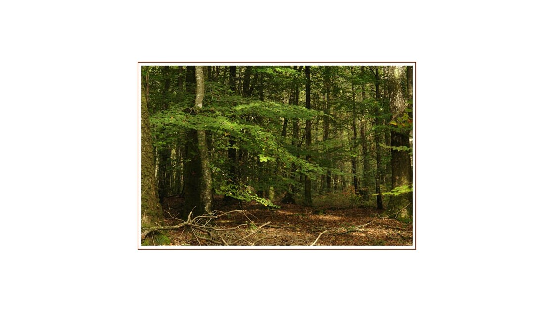 Forêt du Gavre