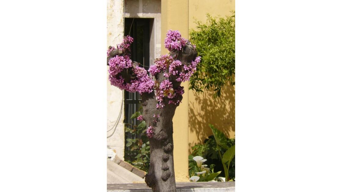 A fleur de tronc
