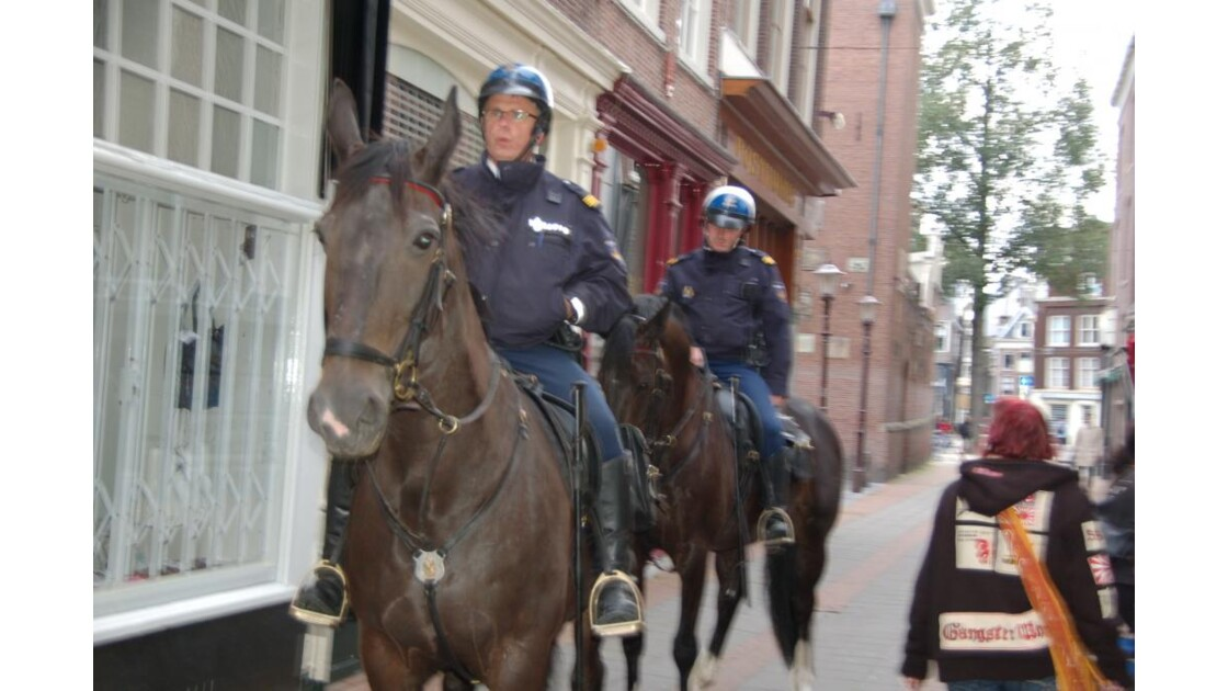 polices hollandaise