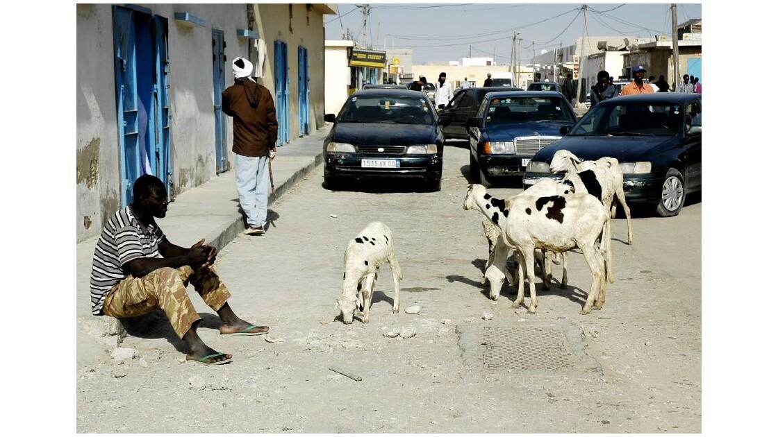 Que faire, sans travail, à Nouadhibou ?