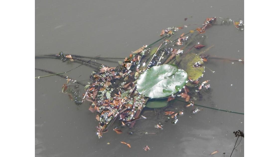 feuilles et herbes sur l'eau