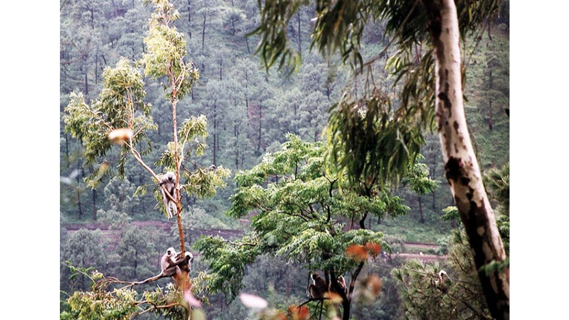 11-01 Vallée de la Sutlej