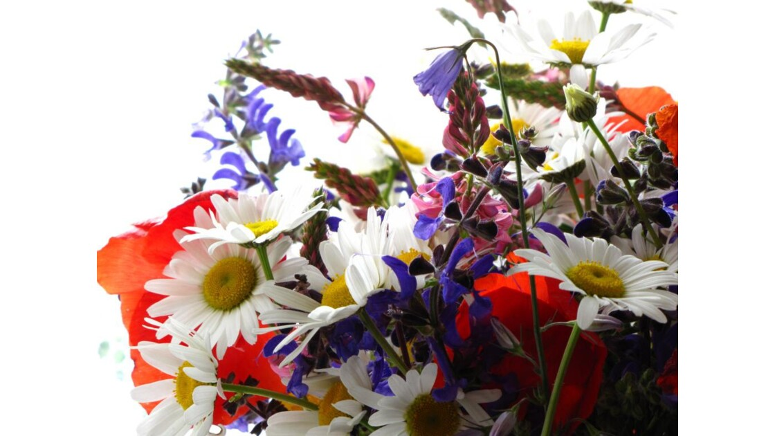 bouquet_2010.jpg