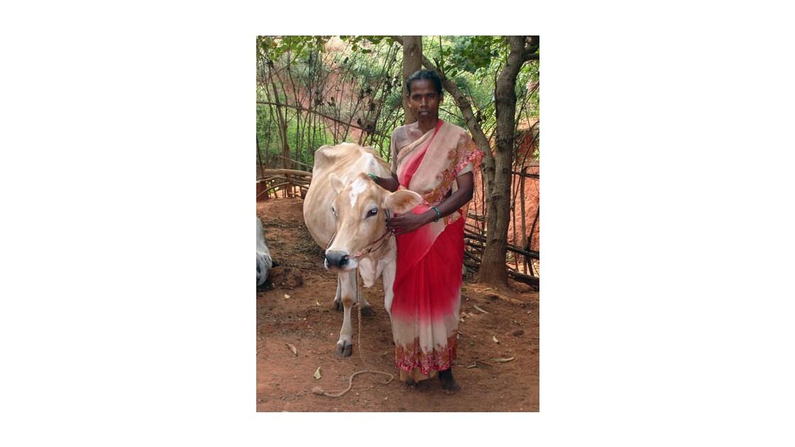La vache…