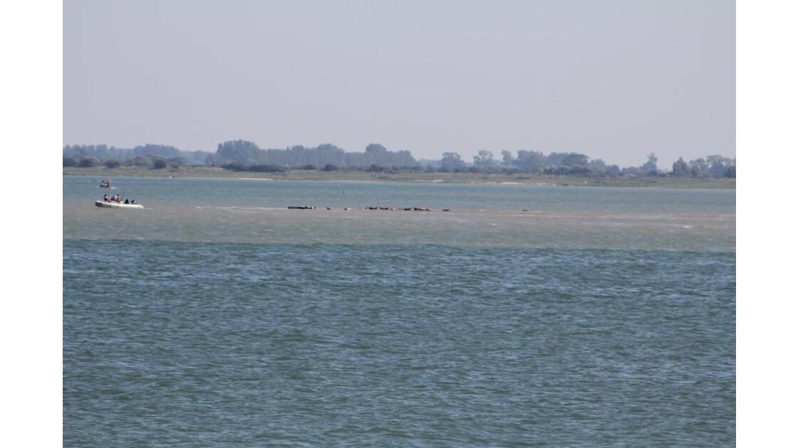 phoques de la Baie d'Authie