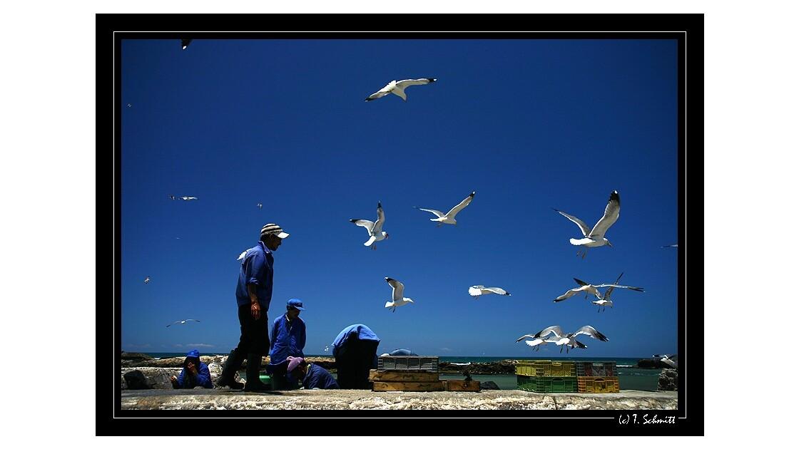 Retour de pêche à Essaouira