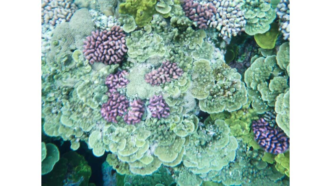 Tanna, snorkeling, coraux