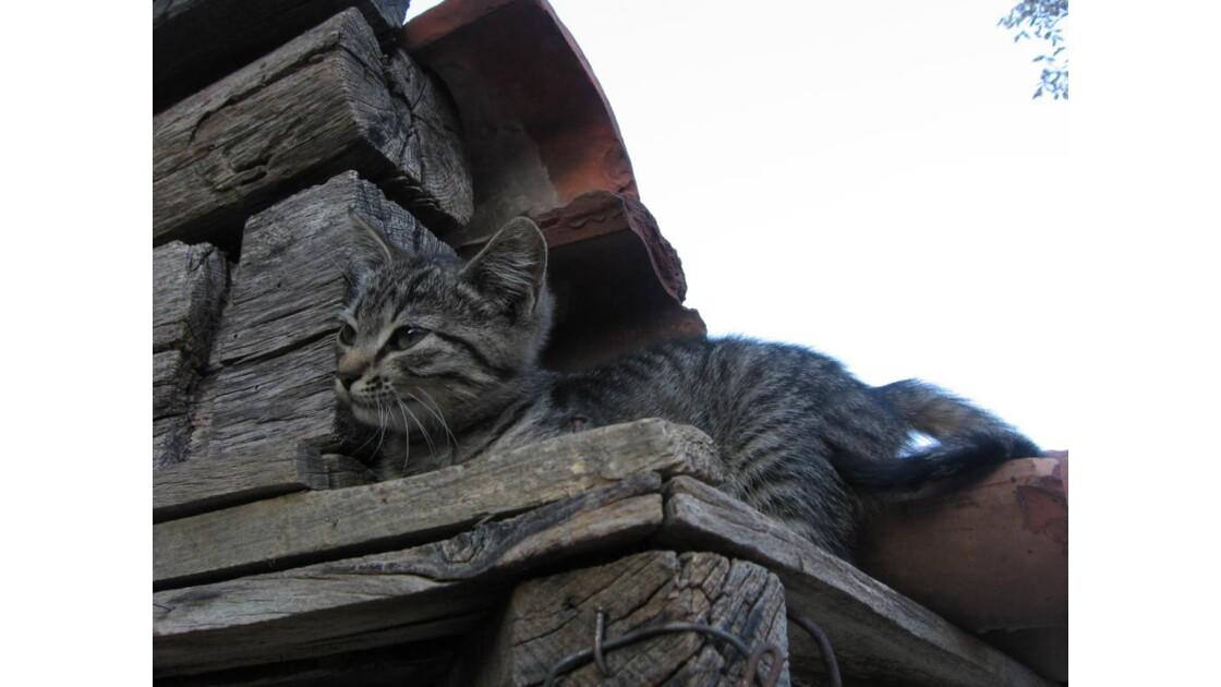 mignon chaton !