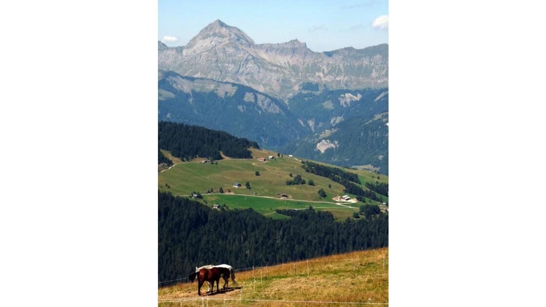 Chevaux, Alpes