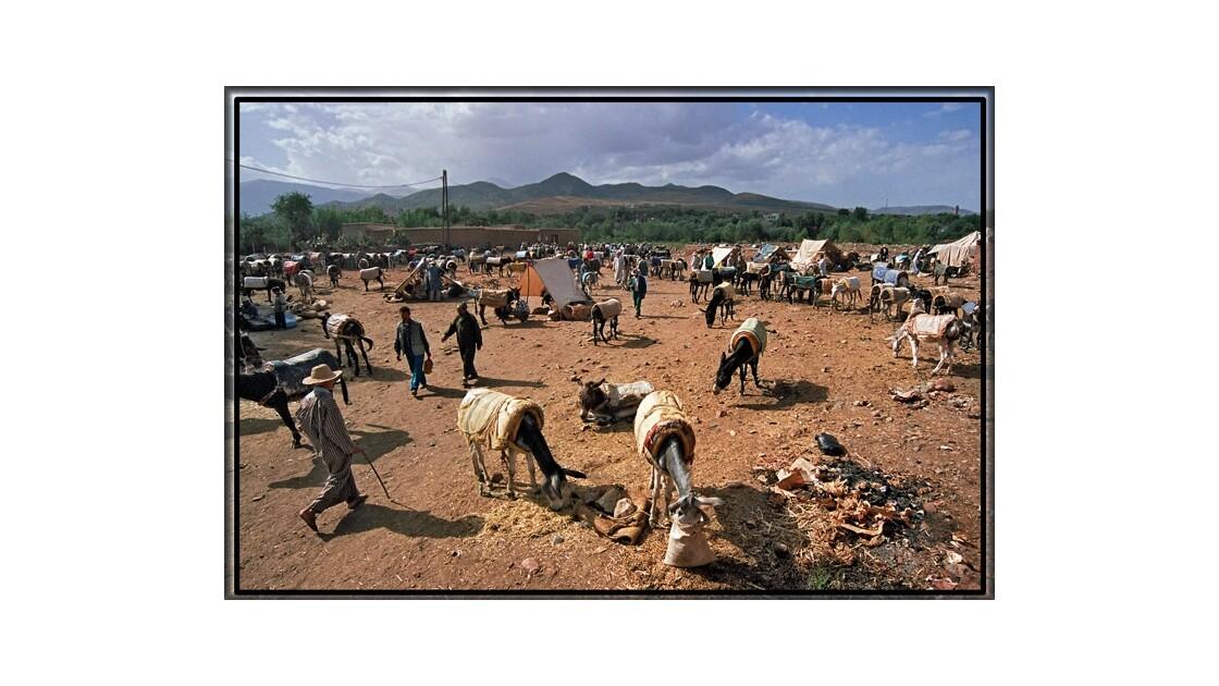 Parcking d'ânes au Maroc
