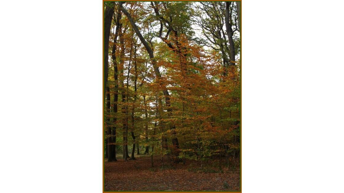 Le triomphe de l'automne