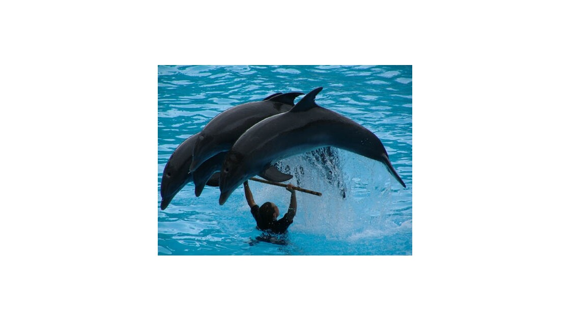 saut de dauphins
