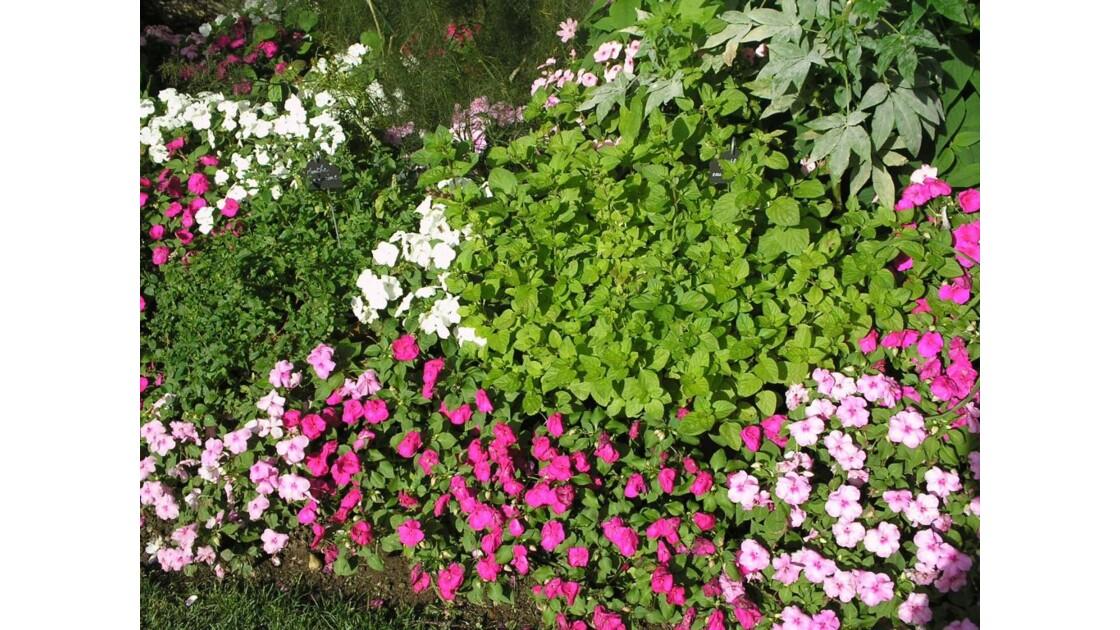 les plantes du cloître