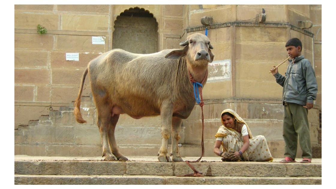 Sacred Búfalo