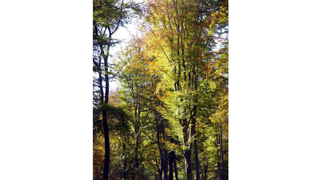 Forêt de Verte 10