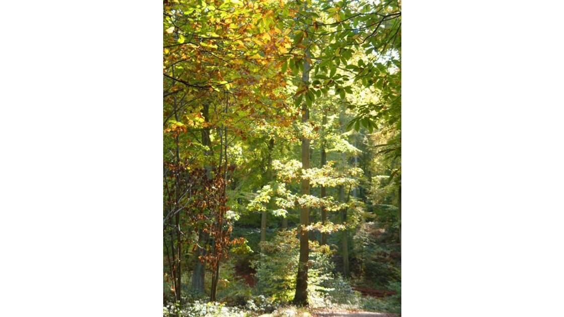 Forêt de Verte 11
