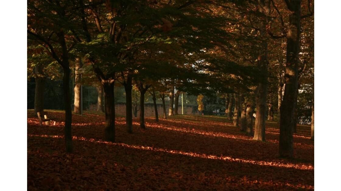 couleurs d'automne.jpg