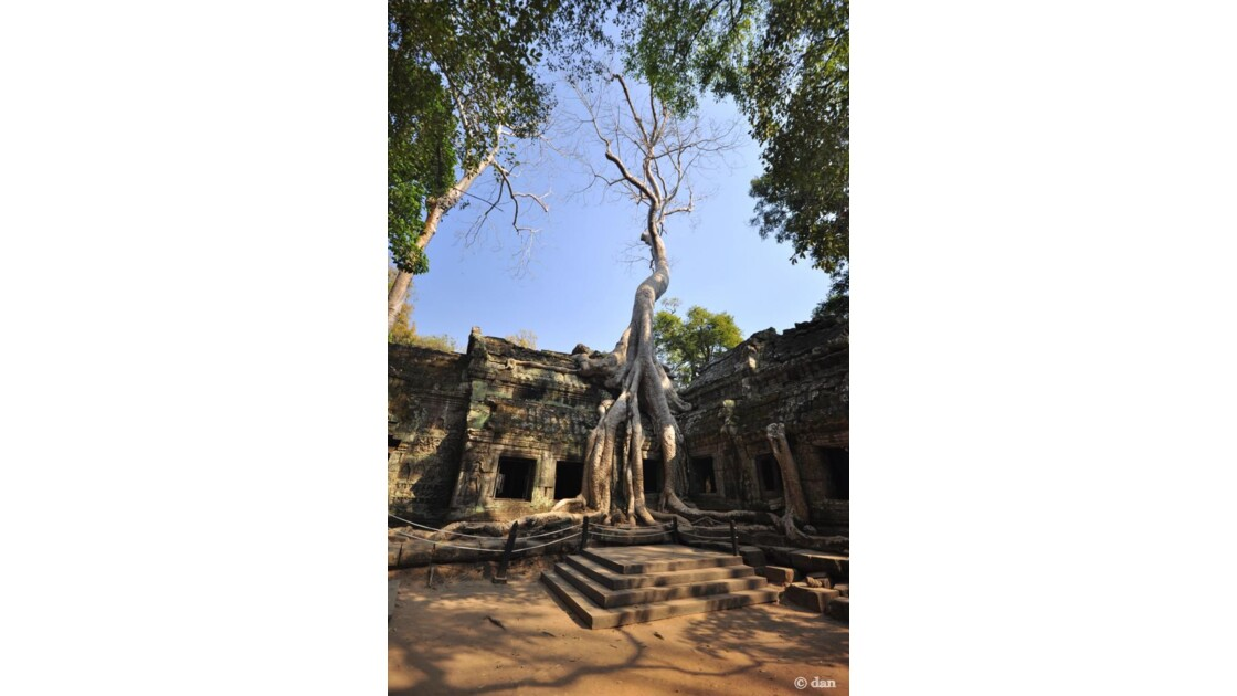 Le temple Ta Prohm, angkor