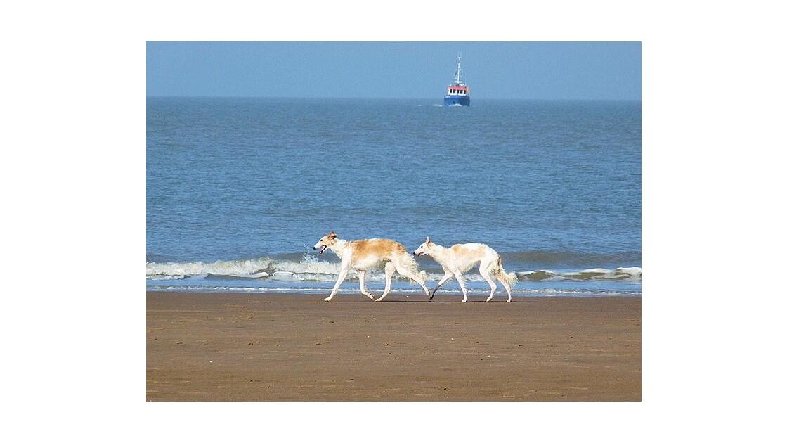 Deux chiens