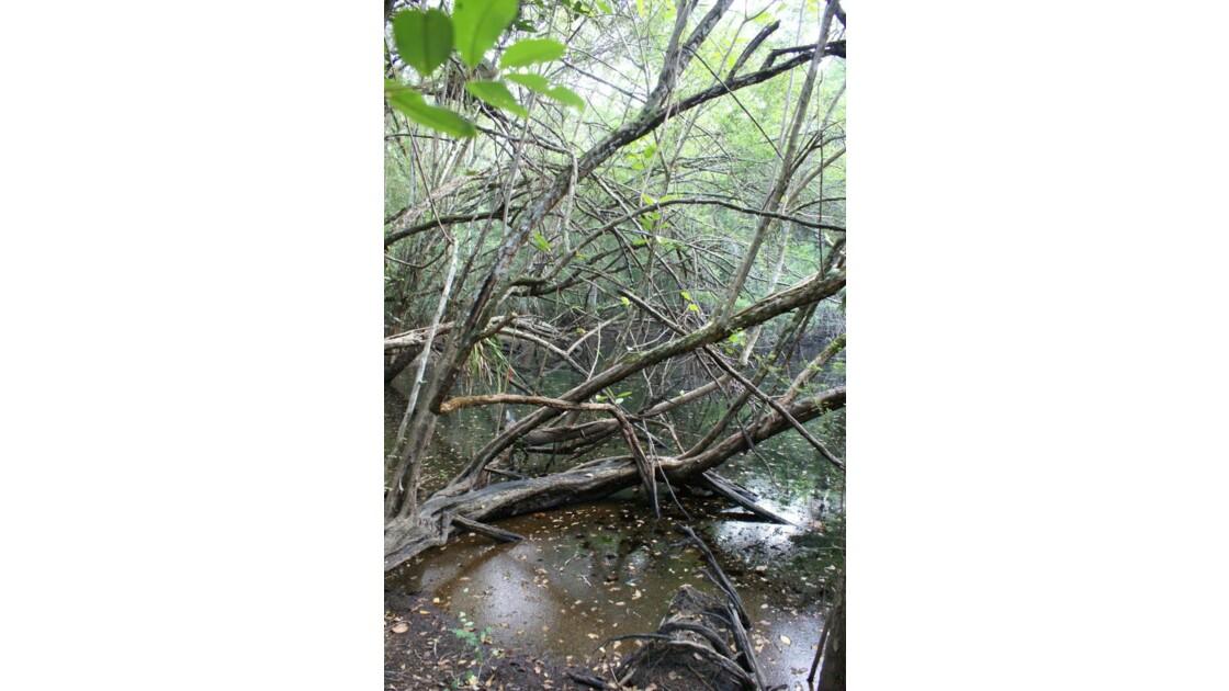Forêt Tropicale de Calakmul