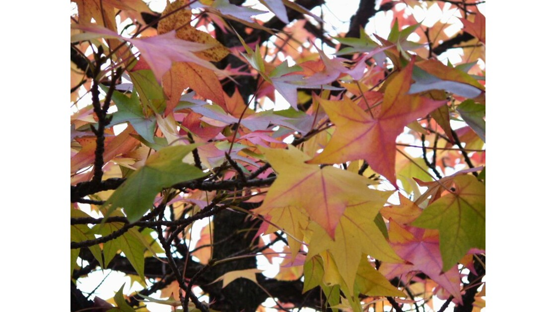 automne multicolore