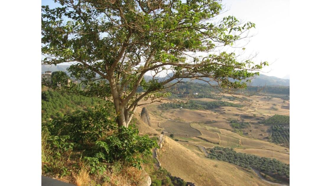 la vallée vue de haut a ronda