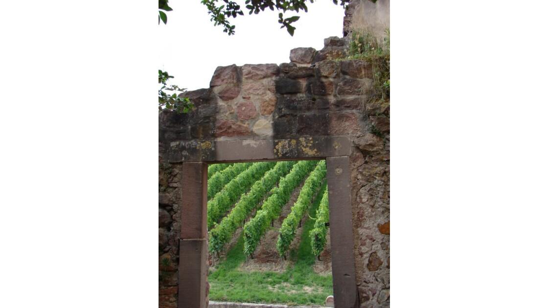 Le vignoble (Riquewihr)