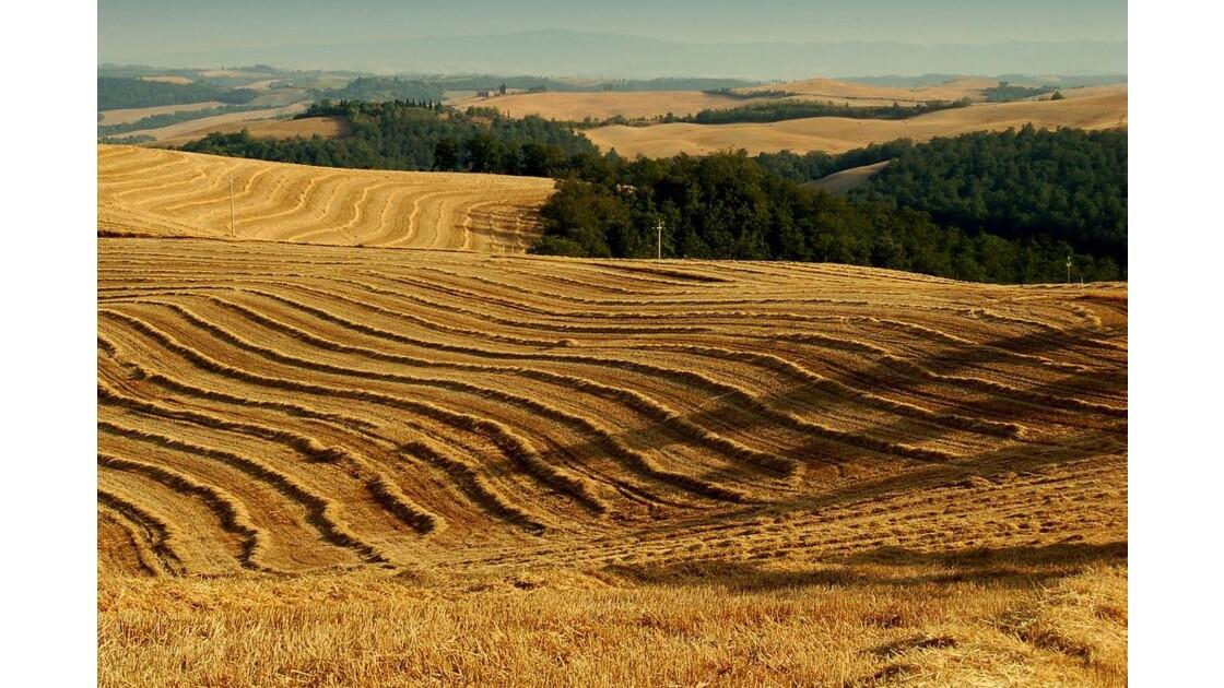 Toscane : paysage aux chaumes