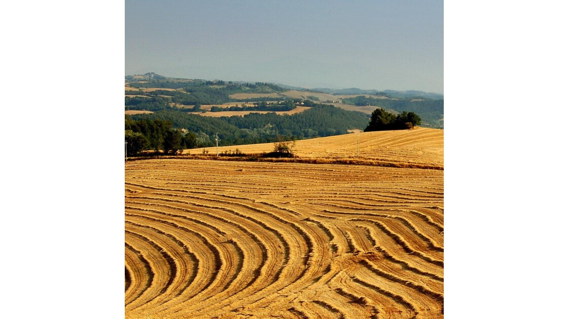 Toscane : chaumes